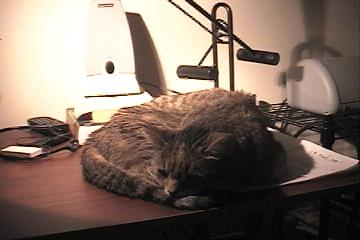 Teddy_on_desk_008
