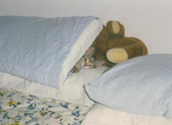 Teddy_baby_in_pillow2_2