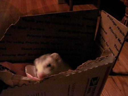 Bucky.shipping