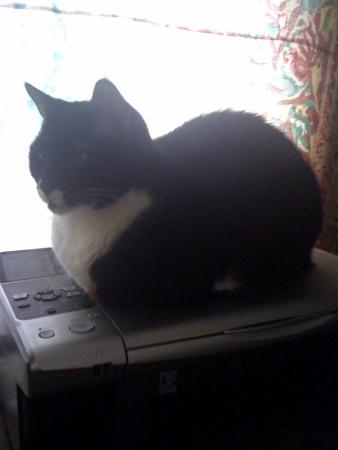 Printer cat