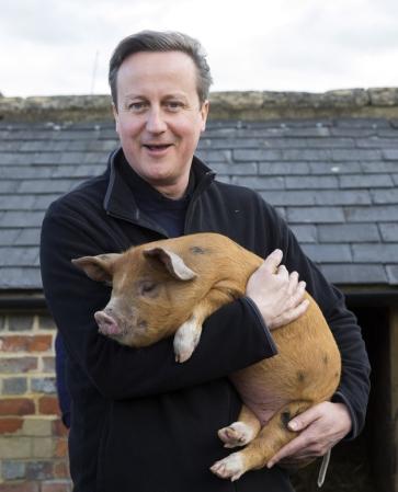 Posh boy & Pig