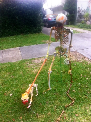 Walking the skeletal dog