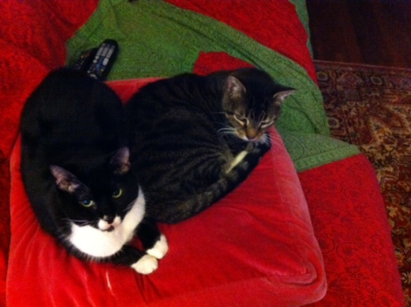 December cats.