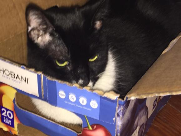 Della in the Yogurt box.
