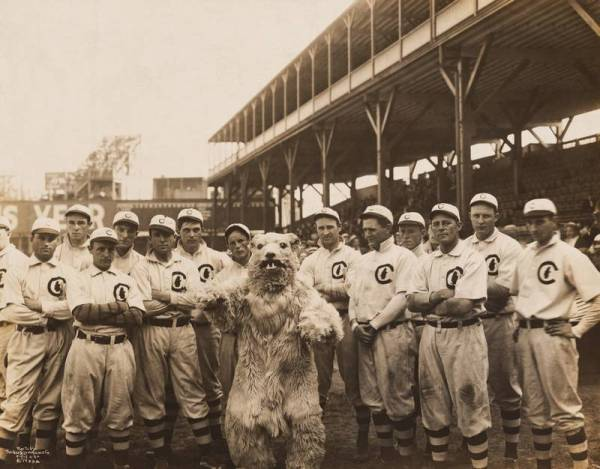 Cubs and Mascot.