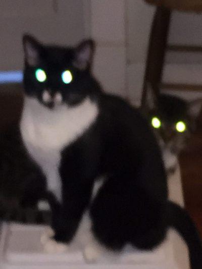 Devil-Eyed