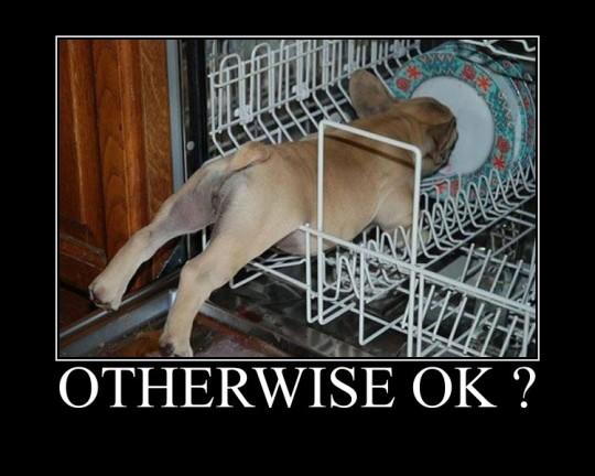 OtherwiseOKdog